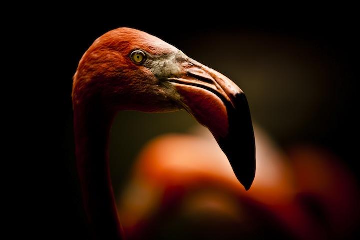Creative Visual Art | Stunning close-up photos of wild animals