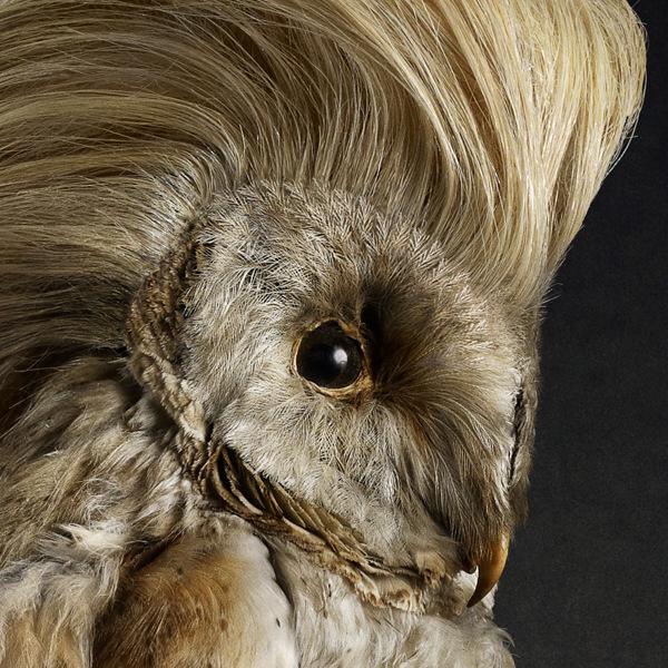 Creative Heads Hair Design Ellenbrook Wa