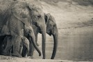 Beautiful Elephant Photography